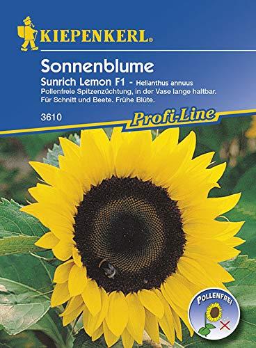 Kiepenkerl Sonnenblume Hohe