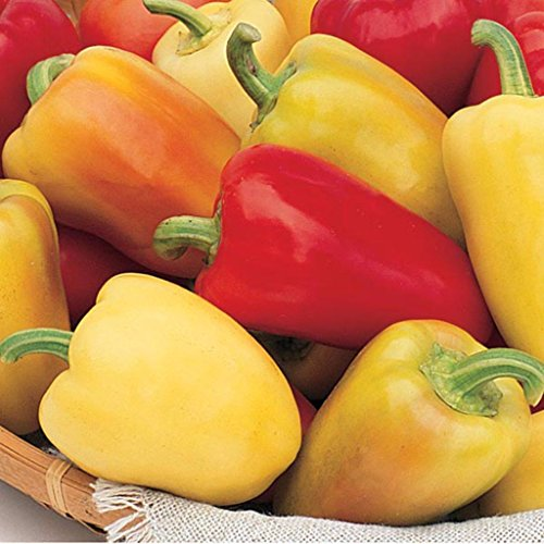 Romanian Sweet Pepper Seeds (Capsicum annuum) 10+ Rare Vegetable Seeds + FREE Bonus 6 Variety Seed Pack - a $29.95 Value! Packed in FROZEN SEED CAPSULES for Growing Seeds Now or Saving Seeds for Years