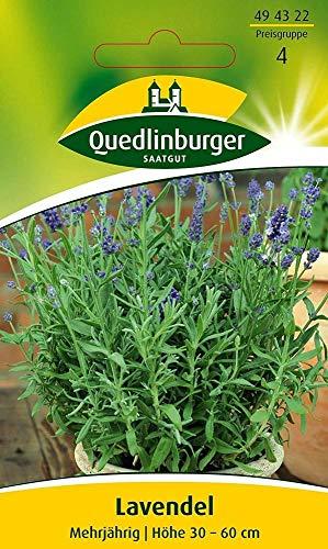 Lavendel mehrjährig, 1 Tüte Samen
