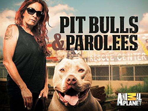 Pit Bulls & Parolees Season 10