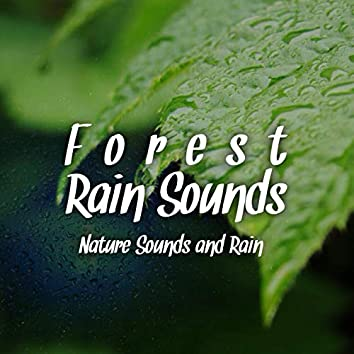 Forest Rain Sounds