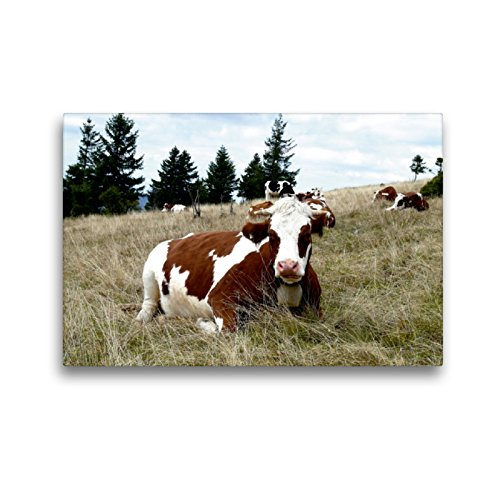 CALVENDO Premium Textil-Leinwand 45 x 30 cm Quer-Format Schwarzwald & Kühe im Hochformat, Leinwanddruck von Stefanie Goldscheider