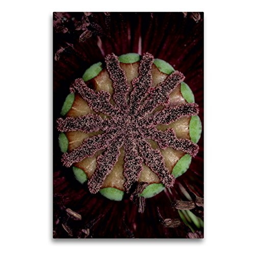CALVENDO Premium Textil-Leinwand 60 x 90 cm Hoch-Format Die Narbe, Leinwanddruck von Brigitte Deus-Neumann