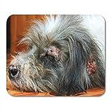 Alfombrilla para ratón Brown Mange Stray Dog es Dermatitis Enfermo Rojo Alfombrilla abandonada para Cuadernos, Computadoras de Escritorio Alfombrillas para ratón, Suministros de Oficina