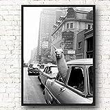 Danjiao Alpaka In Einem Taxi Auf Times Square Leinwanddruck