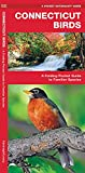 Connecticut Birds: A Folding Pocket Guide to Familiar Species (Wildlife and Nature Identification)