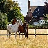 Rompecabezas de 2000 piezas Rompecabezas de dos caballos en la pradera Divertido juguete educativo para niños, escuelas y familias. Gran regalo para niños y niñas a partir de 6 años para estimular el