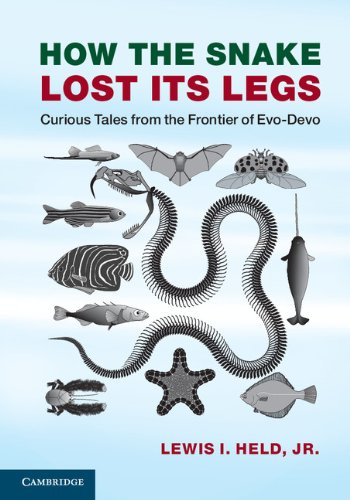 How the Snake Lost its Legs: Curious Tales from the Frontier of Evo-Devo