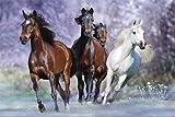 Pferde - Langrish, Running - Natur Poster Foto Pferde -