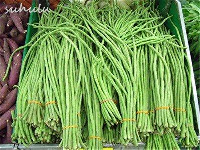 8 Pcs Multi Color haricots desserrées graine long des haricots semences Graines de plantes en pot Fleurs vivaces Cultivez Plant Garden 12 Plus rapide