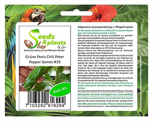 Stk - 40x Penis Chili Peter Pepper grüne Gemüse Pflanzen - Samen #19 - Seeds Plants Shop Samenbank Pfullingen Patrik Ipsa