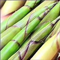 北海道産 山菜 天然 根曲がり竹(2kg入り) 竹の子 北海道 お取り寄せ