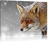 wunderschöner Fuchs im Schnee schwarz/weiß Format: 60x40