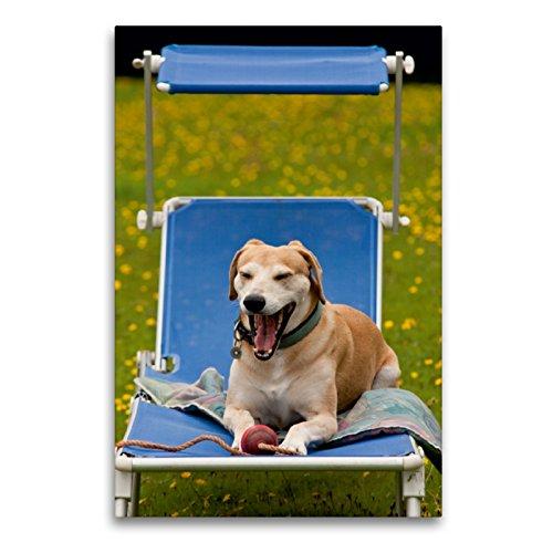 CALVENDO Premium Textil-Leinwand 60 x 90 cm Hoch-Format Lustiges Hundeleben - Azawakh Ridgeback Porträts, Leinwanddruck von Meike Bölts