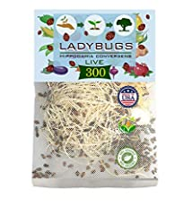 Ladybugs are general predators that feed on a variety of slow-moving insects including Aphids, Moth eggs, Mites, Scales, Thrips, Leaf Hoppers, Mealybugs, Chinch Bugs, Asparagus Beetle larvae, Whitefly and others Ladybugs are good bugs great for kids,...