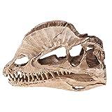 YO-HAPPY Rompecabezas, Dilophosaurus Dinosaurio Calavera Resina Artesanía Esqueleto fósil Modelo de enseñanza Decoración de la Oficina en casa de Halloween