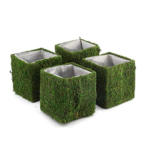BalsaCircle 4 Green 6x6-Inch Natural Moss Rustic Square Planter Boxes Centerpieces Party Wedding Events Home Decorations