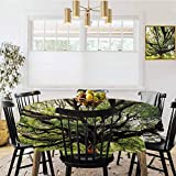 shirlyhome Nature Covers for The Home Table Cover The Largest Monkey Pod Tree in Thailand Green Big Branches Growth Eco Photo Decorative Round Tablecloth Green Brown (Diameter 60')