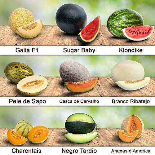 9 verschiedene Melonen-Sorten über 200 frische Samen 100% Natursamen aus Portugal rar sehr hohe Keimrate