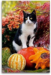 Calvendo El Gato Curioso está en los Calabazas y observa, 80 x 120 cm