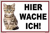 kleberio® - Hier wache ich! - Katzen Schild Kunststoff Warnschild 20 x 30 cm thumbnail