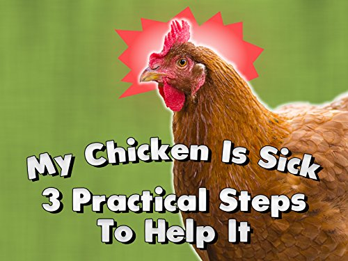 My Chicken Is Sick: 3 Practical Steps To Help It Documentary Garden Home TV