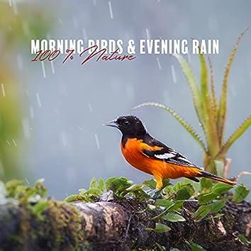 Morning Birds & Evening Rain: 100 % Nature