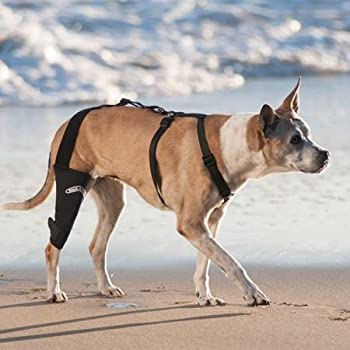 best dog brace for torn acl