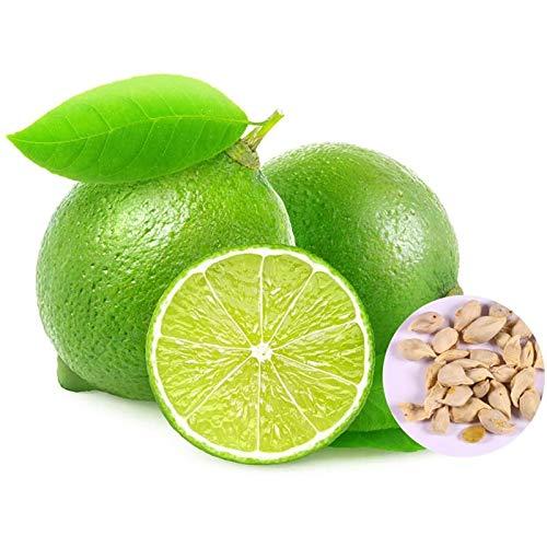 Semillas de árbol de limón, 20 unidades, productivas, no transgénicos, viables, para patio, plantas de semillero para horticultura, semillas de árbol de limón