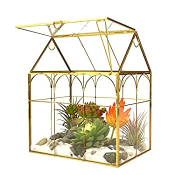 Best tabletop greenhouse Reviews
