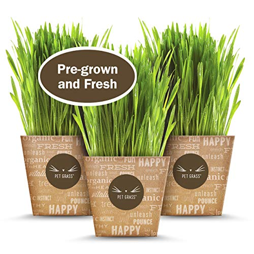PET Grass by PET Greens - PRE-Grown 3-Pack 100% Certified...