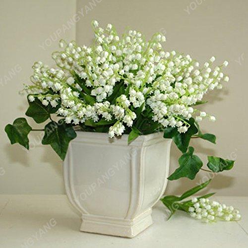 200 pcs/sac Muguet Graines de fleurs de Bell Orchid Seeds Rich Aroma Bonsai Balcon fleurs pour la maison Plantes en pot noir