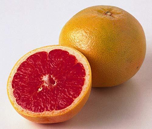 GETSO Samen Grapefruit - RUBINROT - Zitrusfrucht - Medizinische Leistungen - 10 Samen