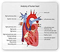 教育用マウスパッドおしゃれ耐久滑り防止、心の人体解剖学の臓器の静脈の心臓の構造、長方形の滑り止めのゴム製マウスパッドおしゃれ耐久滑り防止、、コーラルレッド
