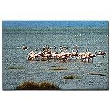 Flamingo Patagonia Calafate Argentina Puzzle 1000 Piezas para Adultos Familia Rompecabezas Recuerdo Turismo Regalo