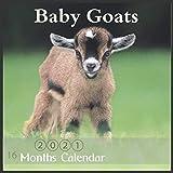 2021 Baby Goats Calendar: Wall & Office Calendar, 16 Month Calendar Of Cute Baby Goats with Major Holidays