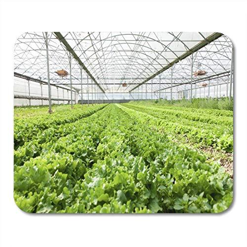 Muismat voor landbouw, groen, salade, biologisch in kassen