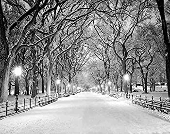 Ghjxda 5D DIY Diamond Painting Kits Tree Painting Arts Craft The Mall in Central Park NYC During Snow Storm Early Morning Painting by Numbers for Adults Canvas Full Drill 16x20 Inch