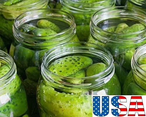 AGROBITS 50 graines: Usa Vendeur Wisconsin Smr Décapage concombre Graines Heirloom non Ogm