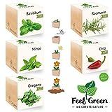 Feel Green Ecocube Juego de Hierbas con 5 variedades - 25% Ahorro en el Paquete, Plantas en Dados de Madera, Idea de Regalo sostenible, Grow Your Own/Anzuchtset, Made in Austria
