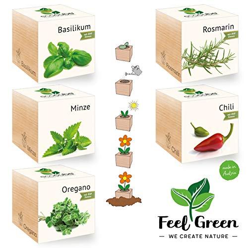 Feel Green Ecocube Kit d'herbes avec 5 variétés - 25% d'économie dans Le Paquet, Plantes dans la Vague en Bois, idée Cadeau Durable, Grow Your Own/Culture, fabriqué en Autriche