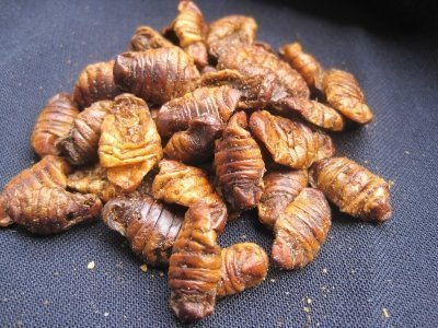 Gusanos de Seda 250G Silkworm