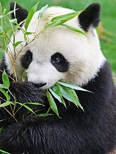 ZXXGA DIY 5D Diamante por Número Pintura_Panda Animal Diamond Painting Kits_Rhinestone Bordado de Punto de Cruz Artes Manualidades Decoracion Regalo 40x50cm