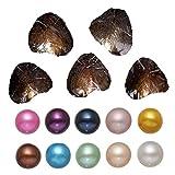 Unbekannt Auster mit Perle Innen Süßwasser Love Wish Pearl Shell Oyster Perlen 7–8mm 100/Pack