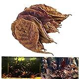 Zonster 10pcs / Pack Natural India Hojas de Almendro Terminalia Isla Catappa foetida para Peces de Acuario Tanque de Limpieza