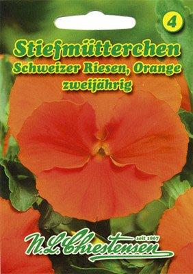 Stiefmütterchen Schweizer Riesen Orange Viola wittrockiana