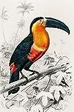 Tukan: Vogel Notizheft, Tagebuch, Notebook, Schreibheft etwa A5 (15,3 x 22,9 cm), liniert mit Tucan Motiv (German Edition)