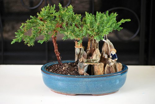 9GreenBox - Juniper Tree Bonsai with Poll and Fisherman