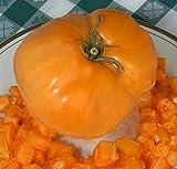 TomatoFest Dixie Golden Giant Heirloom biologique Graines de tomates