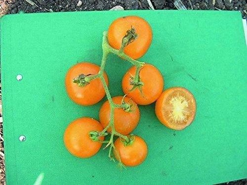 Il vous suffit de graines de l?gumes Bio???Graines de tomate???Jaune la perfection???175???Gros Lot